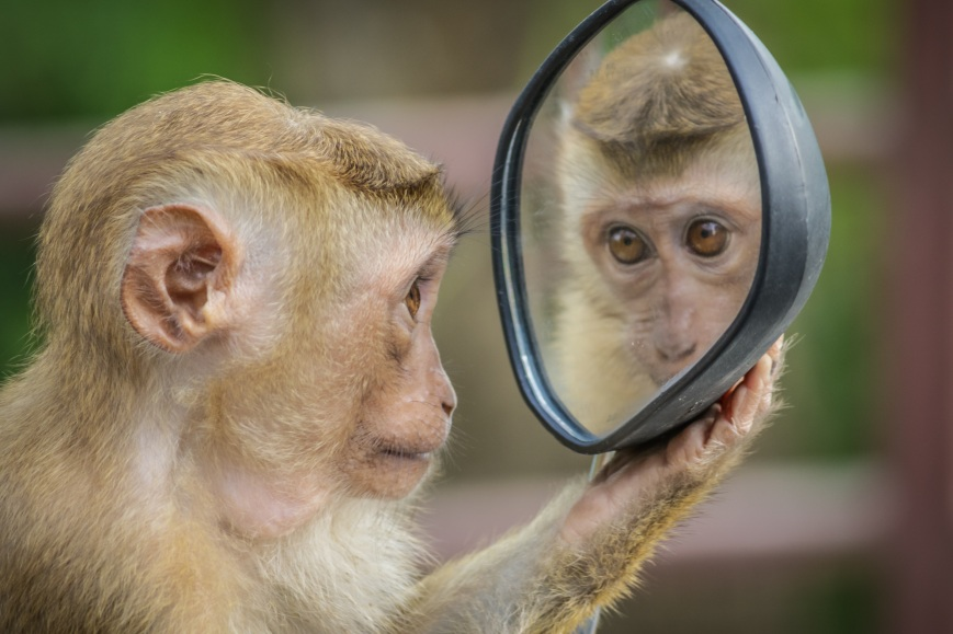 monkey-3512996